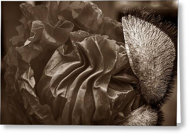 Emergence In Sepia Greeting Card by Chalet Roome-Rigdon