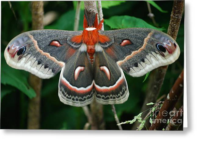 Emergence Greeting Card by Randy Bodkins