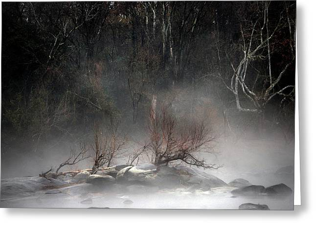 Nature Pictures Greeting Cards - Emergence Greeting Card by Skip Willits