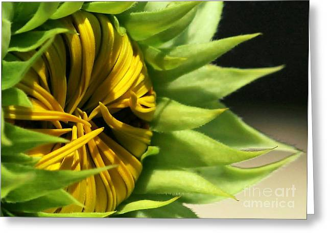 Emerging Sunflower Greeting Card by Sabrina L Ryan