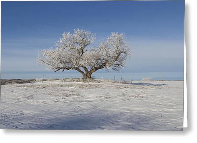 Eminija Tree With Hoarfrost Greeting Card