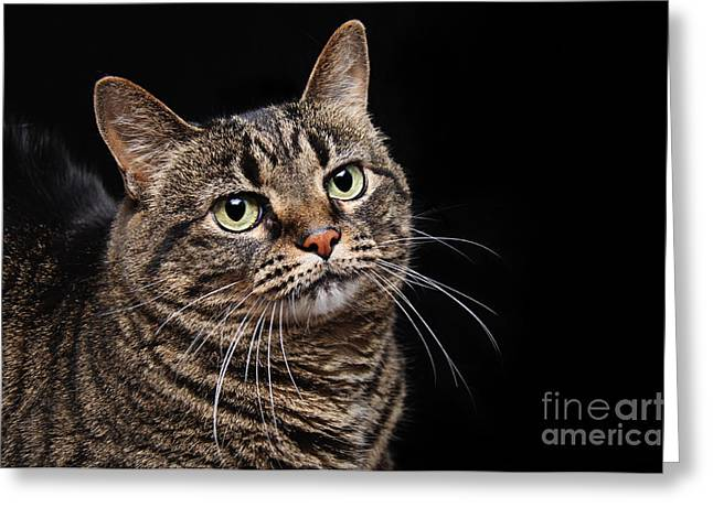 Emmy The Cat Ponder Greeting Card