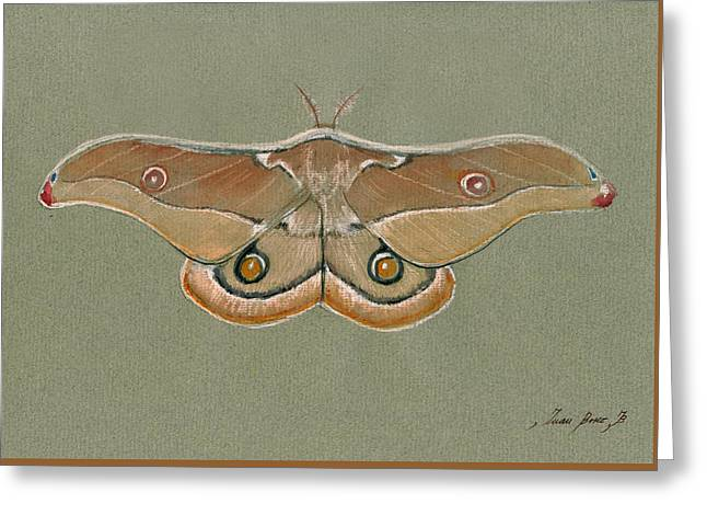 Emperor Gum Moth Greeting Card by Juan Bosco