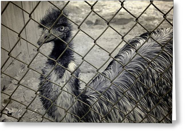 Emu At The Zoo Greeting Card by Luke Moore