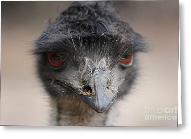 Emu Greeting Card by Roo Printz