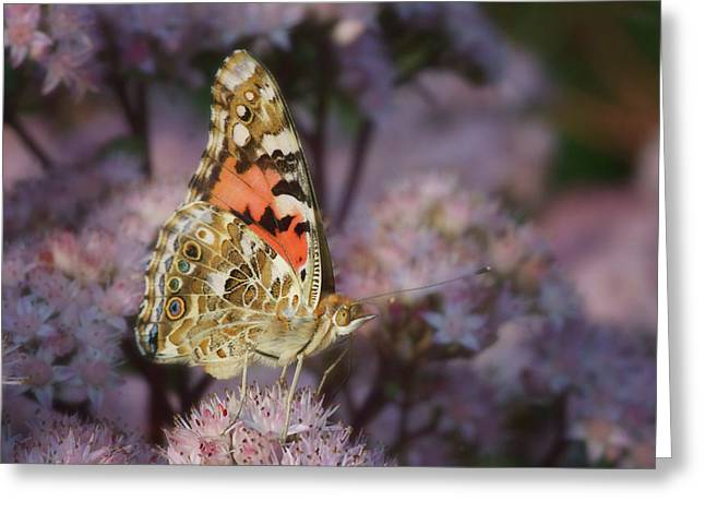 En Garde - Painted Lady - Butterfly Greeting Card