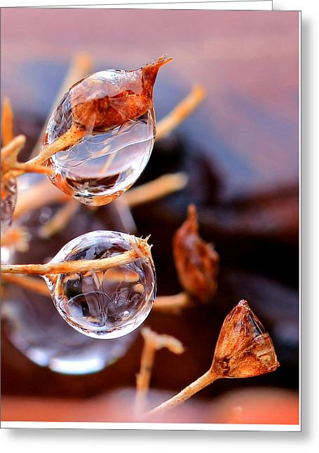 Encapsulated By Ice Greeting Card by Christopher McKenzie