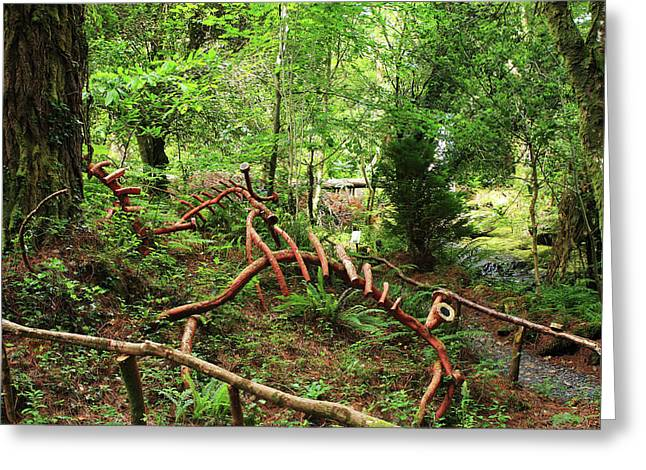 Greeting Card featuring the photograph Enchanted Forest by Aidan Moran