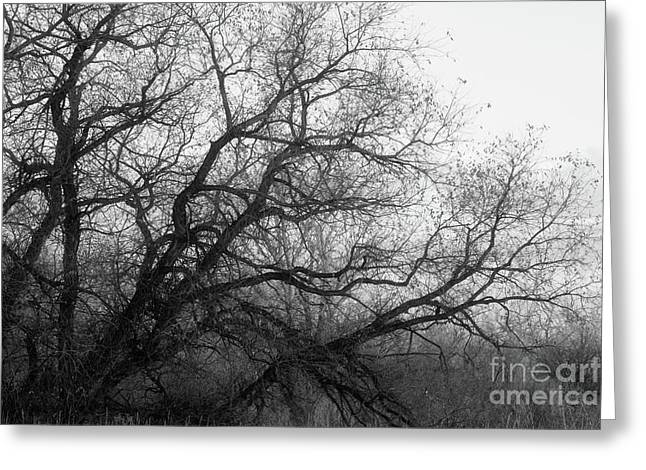 Greeting Card featuring the photograph Enchanted Forest by Ana V Ramirez