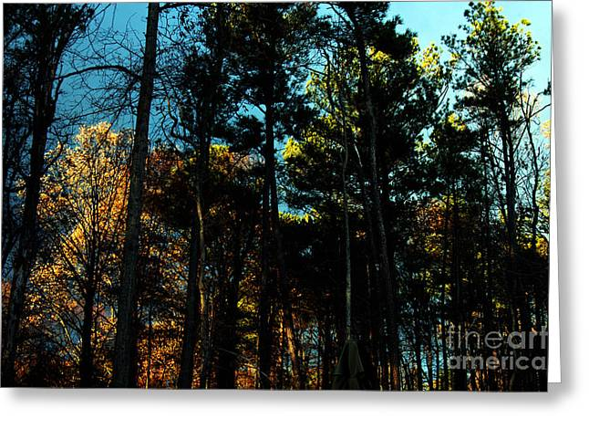 Enchanted Forest Greeting Card by Clayton Bruster