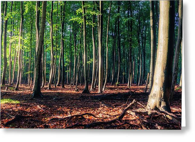 Greeting Card featuring the photograph Enchanted Forest by Dmytro Korol