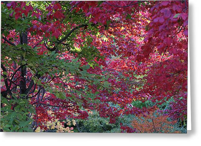 Enchanted Forest Greeting Card by Doris Potter