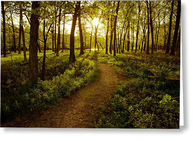 Enchanted Forest Greeting Card by Jason Naudi Photography