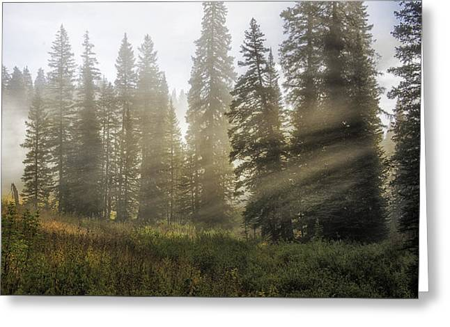 Enchanted Forest Of Kebler Pass  Greeting Card by Thomas Schoeller