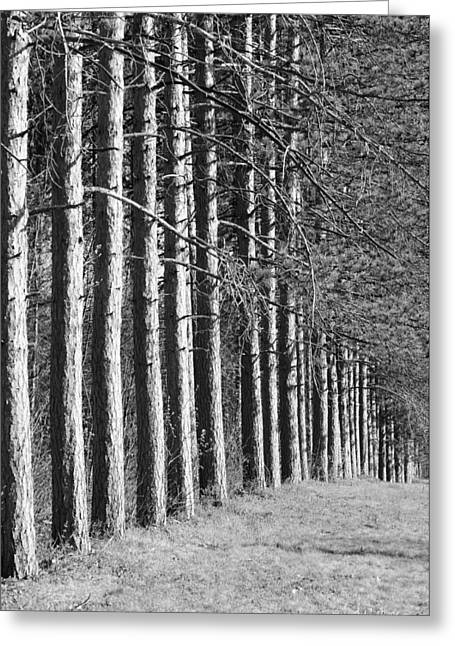 Worcester Greeting Cards - Enchanted Forest Greeting Card by Luke Moore