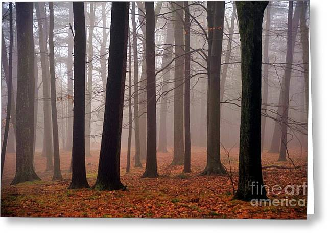 Enchanted Forest Greeting Card by Terri Gostola