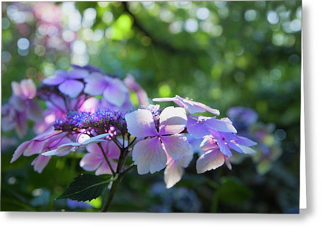 Enchanted Hydrangea Greeting Card by Theresa Tahara
