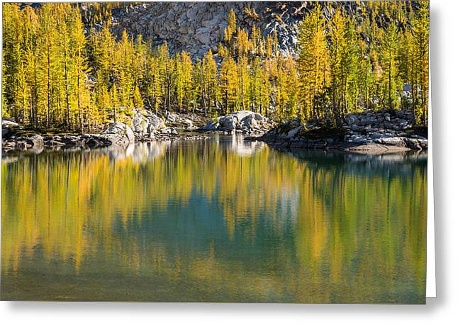 Enchanted Larches Greeting Card by Brian Bonham