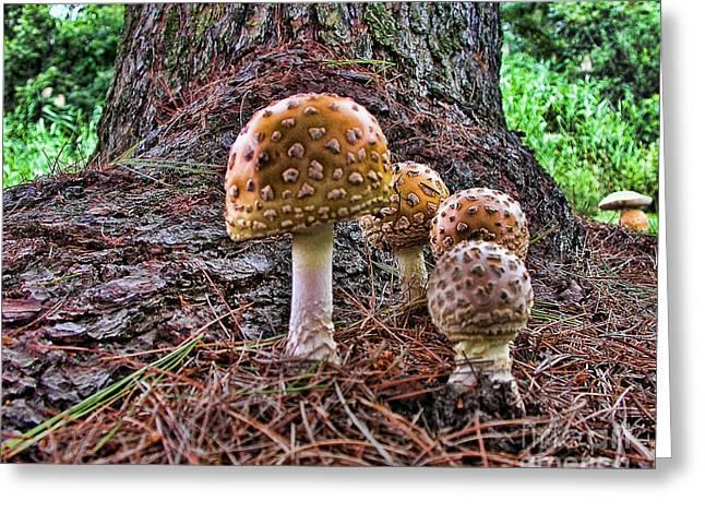 Enchanted Mushrooms Greeting Card by Edward Sobuta