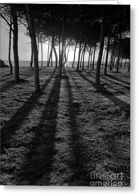 Enchanted Sunset In Monochrome Greeting Card by Angelo DeVal