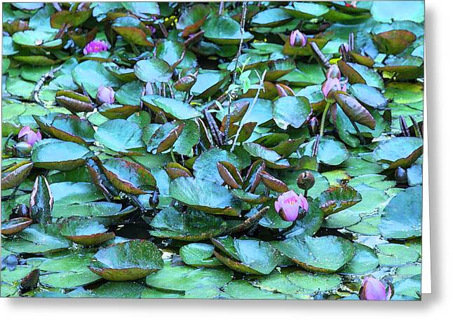 Painted Water Lilies Greeting Card by Theresa Tahara