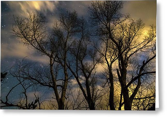 Enchanting Night Greeting Card by James BO Insogna