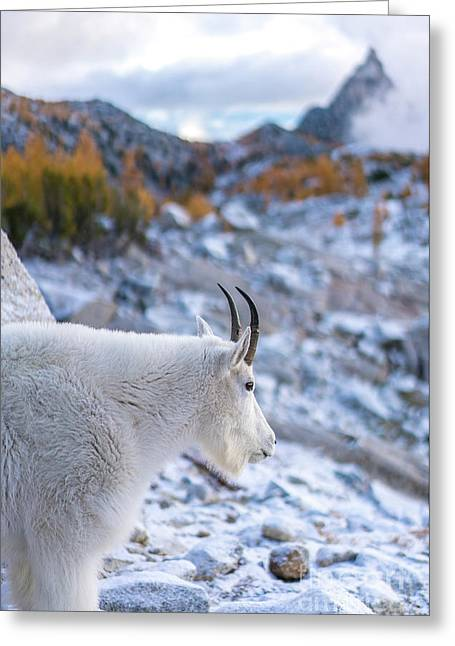 Enchantments Local Goat Resident Greeting Card by Mike Reid