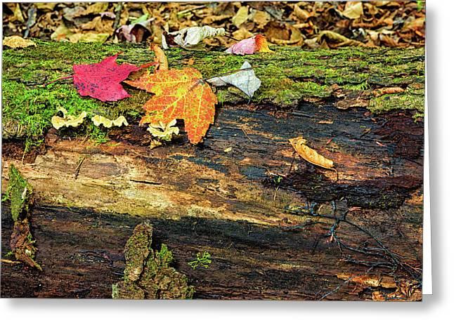 End Of Fall Greeting Card by Janet Ballard