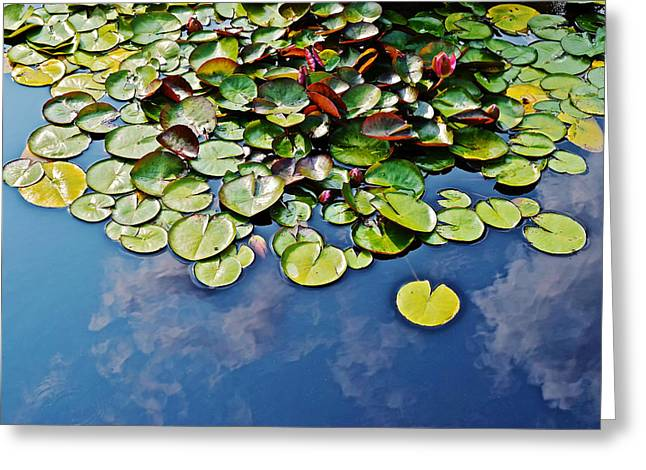 End Of July Water Lilies In The Clouds Greeting Card by Janis Nussbaum Senungetuk