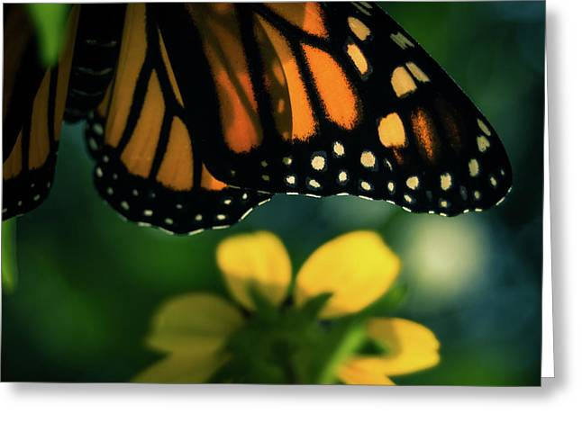 End Of Summer Monarch Greeting Card