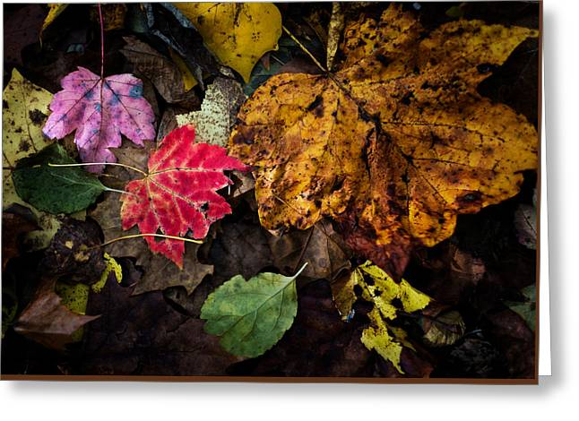 End Of The Leaves Greeting Card by Geoffrey Baker