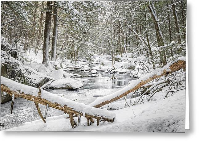 Enders State Forest Greeting Card by Bill Wakeley