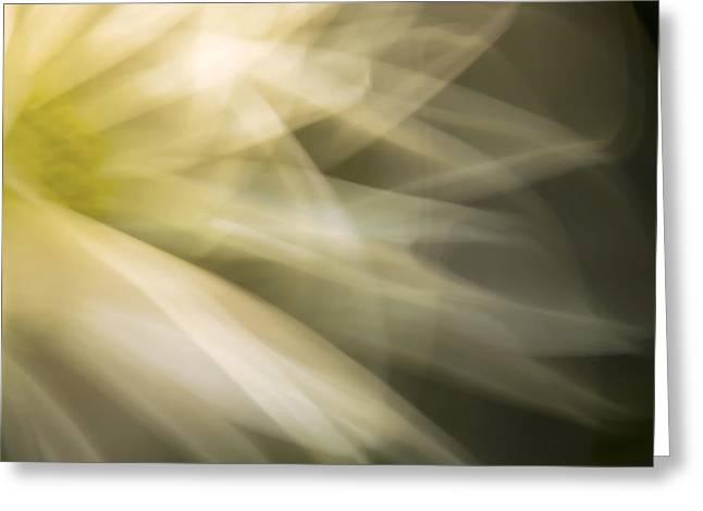Energetic Coneflower  Greeting Card