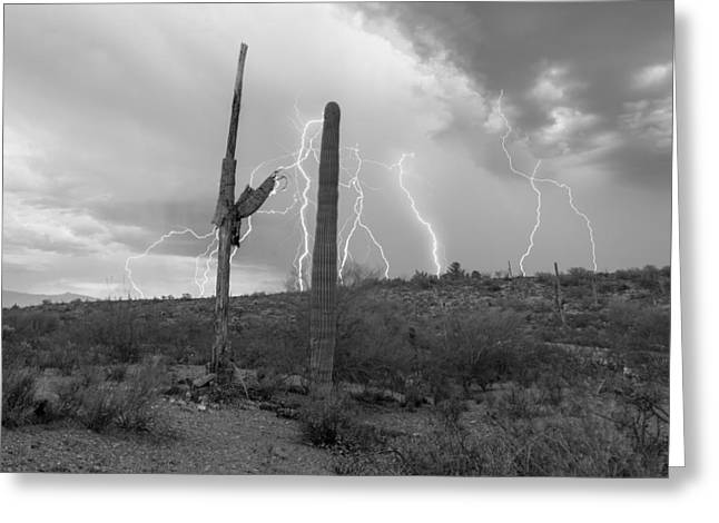 Energized Saguaro Greeting Card by Chris Featherstone
