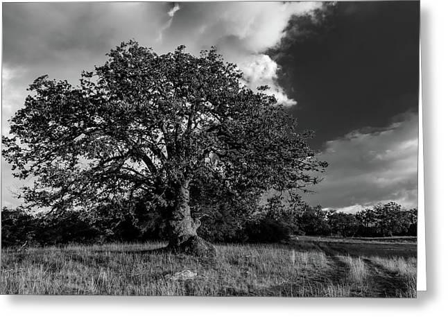 Engellman Oak Palomar Black And White Greeting Card