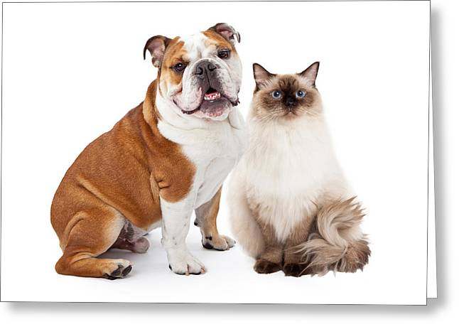 English Bulldog And Ragdoll Cat Sitting Together Greeting Card by Susan Schmitz