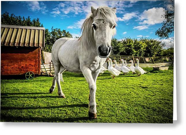 English Gypsy Horse Greeting Card