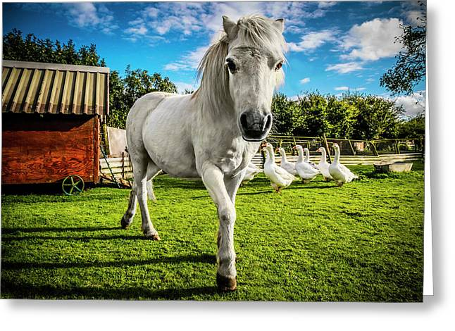 English Gypsy Horse Greeting Card