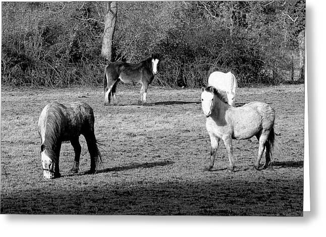 English Horses Greeting Card