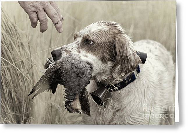Cooperation Greeting Cards - English Setter and Hungarian Partridge - D003092a Greeting Card by Daniel Dempster