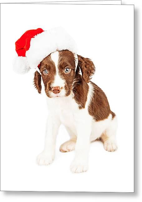 English Springer Spaniel Santa Puppy Greeting Card by Susan Schmitz