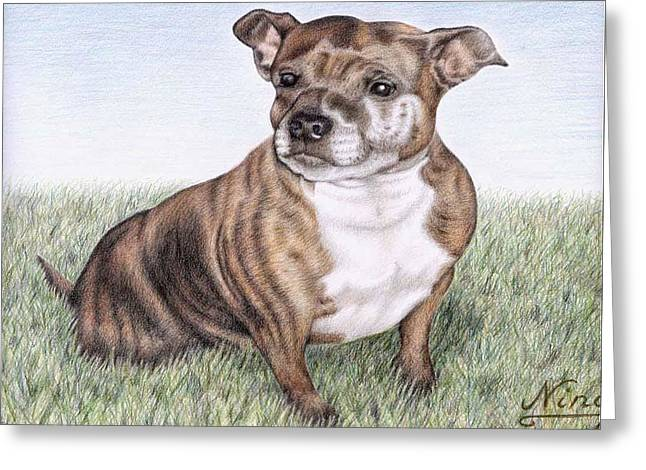 English Staffordshire Terrier Greeting Card by Nicole Zeug