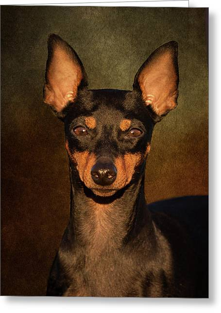 English Toy Terrier Greeting Card