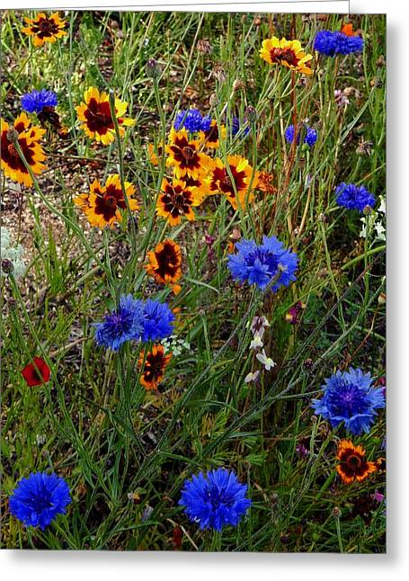 English Cottage Garden Flowers 4 Greeting Card