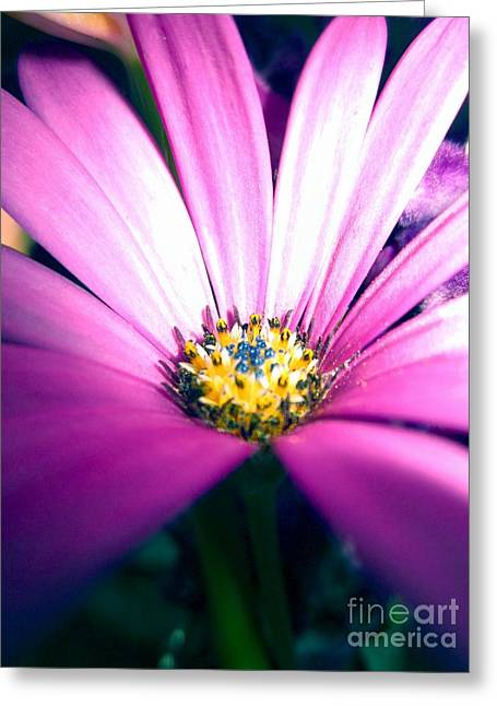 Enhanced Daisy Greeting Card by Miss McLean