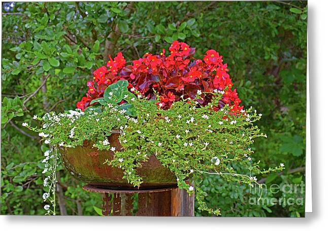 Enjoy The Garden Greeting Card by Ray Shrewsberry