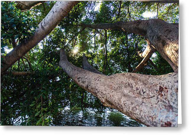 Enjoying Nature Greeting Card by Andrea Mazzocchetti