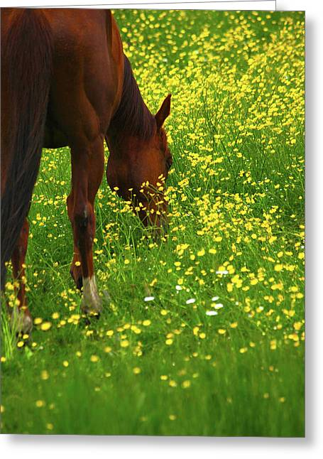 Greeting Card featuring the photograph Enjoying The Wildflowers by Karol Livote