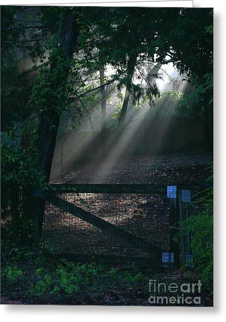 Greeting Card featuring the photograph Enlighten by Lori Mellen-Pagliaro