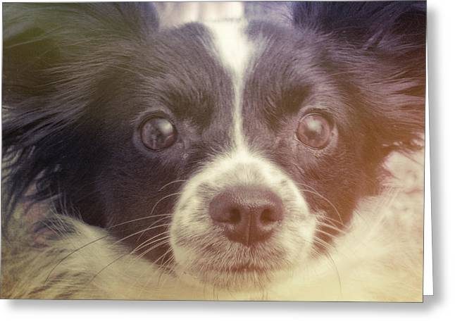 Ennis Greeting Card by JAMART Photography